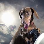 Space Dachshund Dog - Calendario Ascan 2012