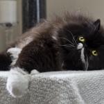Cat - Calendario Ascan 2012